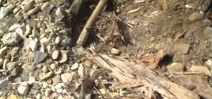Use cotton wood bark to light a fire with a ferro rod