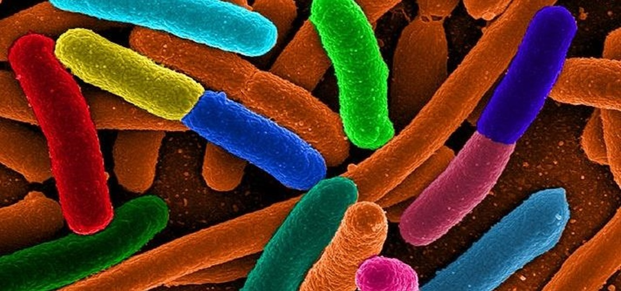 Scientists See Bacteria Responding Electrically to Physical Stimuli for the First Time