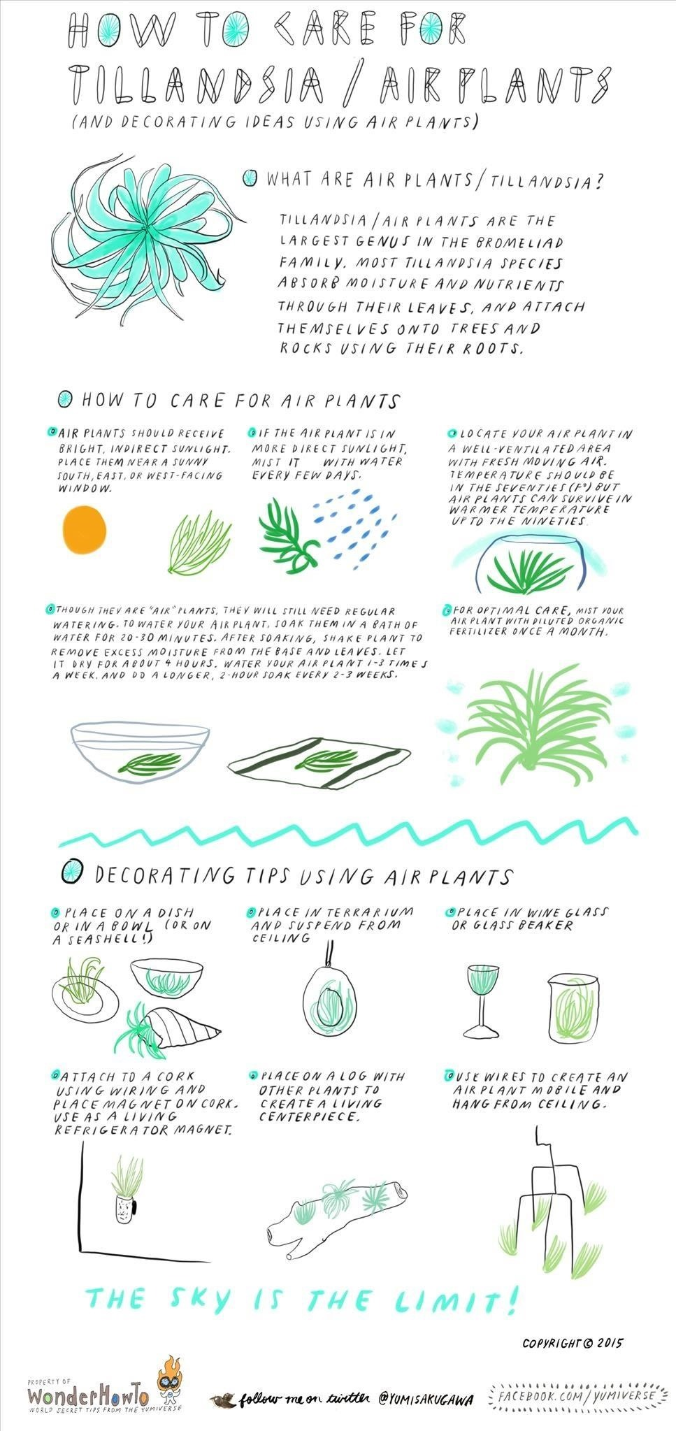 How To Care For Air Plants (& Decorate With Them) « The. Great Kitchen Gadgets. Tile Kitchen Backsplash Ideas. Vintage Kitchen Cupboards. Adhesive Kitchen Backsplash. Kitchens Sinks. Enesco Kitchen Fairies. Hell Kitchen Game. White Pedestal Kitchen Table