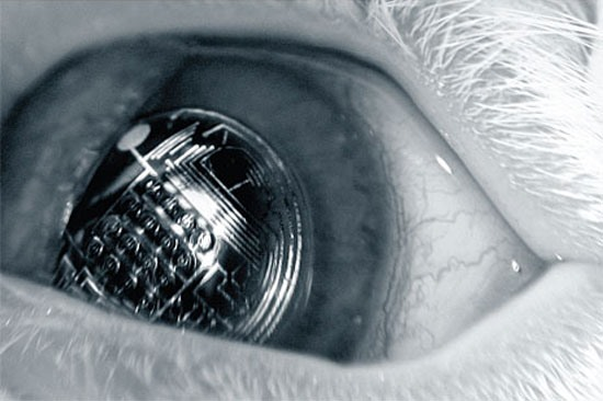 Wonderment Blog: Terminator Vision