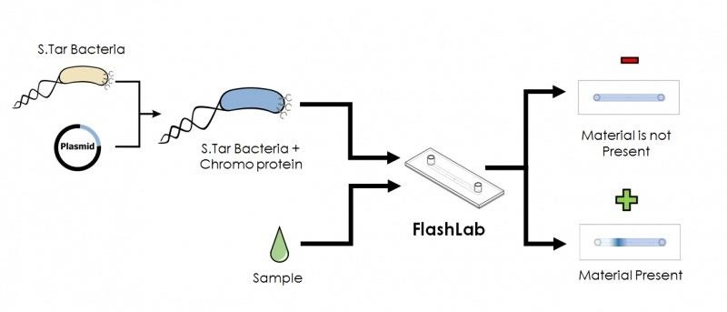 Synthetic Biology: Student Team Gives Dangerous E. Coli a New Role as Bacteria Detective