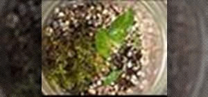 Build a terrarium or indoor garden