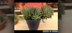Grow a cactus and succulent plants