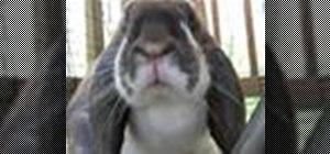 Bathe a pet rabbit and trim its nails