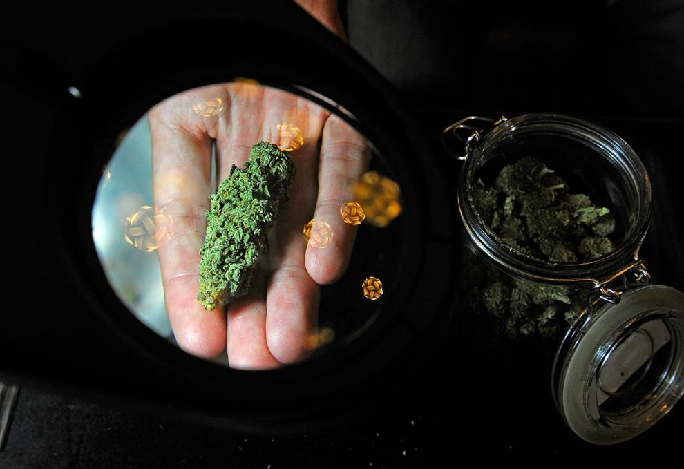 This Year in Marijuana News
