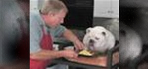 Make an omelet for your doggie