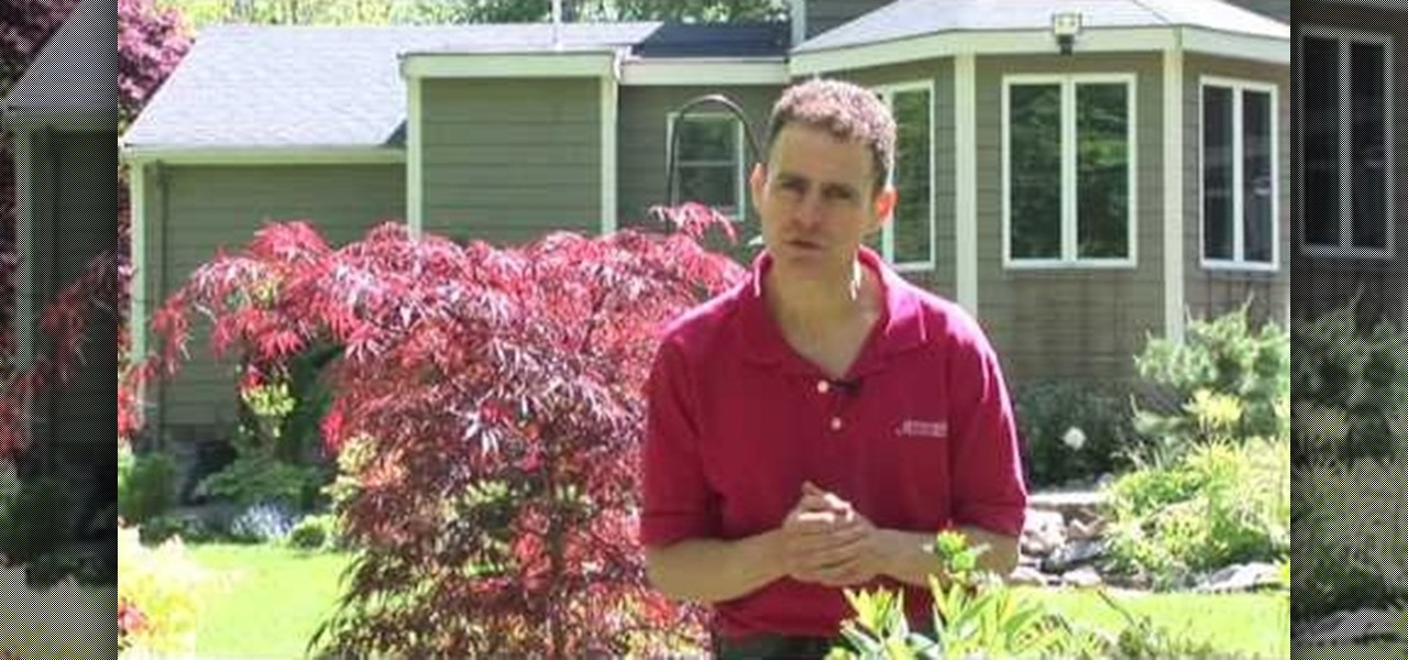 How To Design Your Landscape Using Japanese Maples Gardening