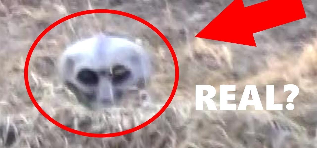 real grey alien caught on tape in swamp supernatural wonderhowto