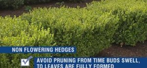 Trim shrubs and prune hedges with Lowe's