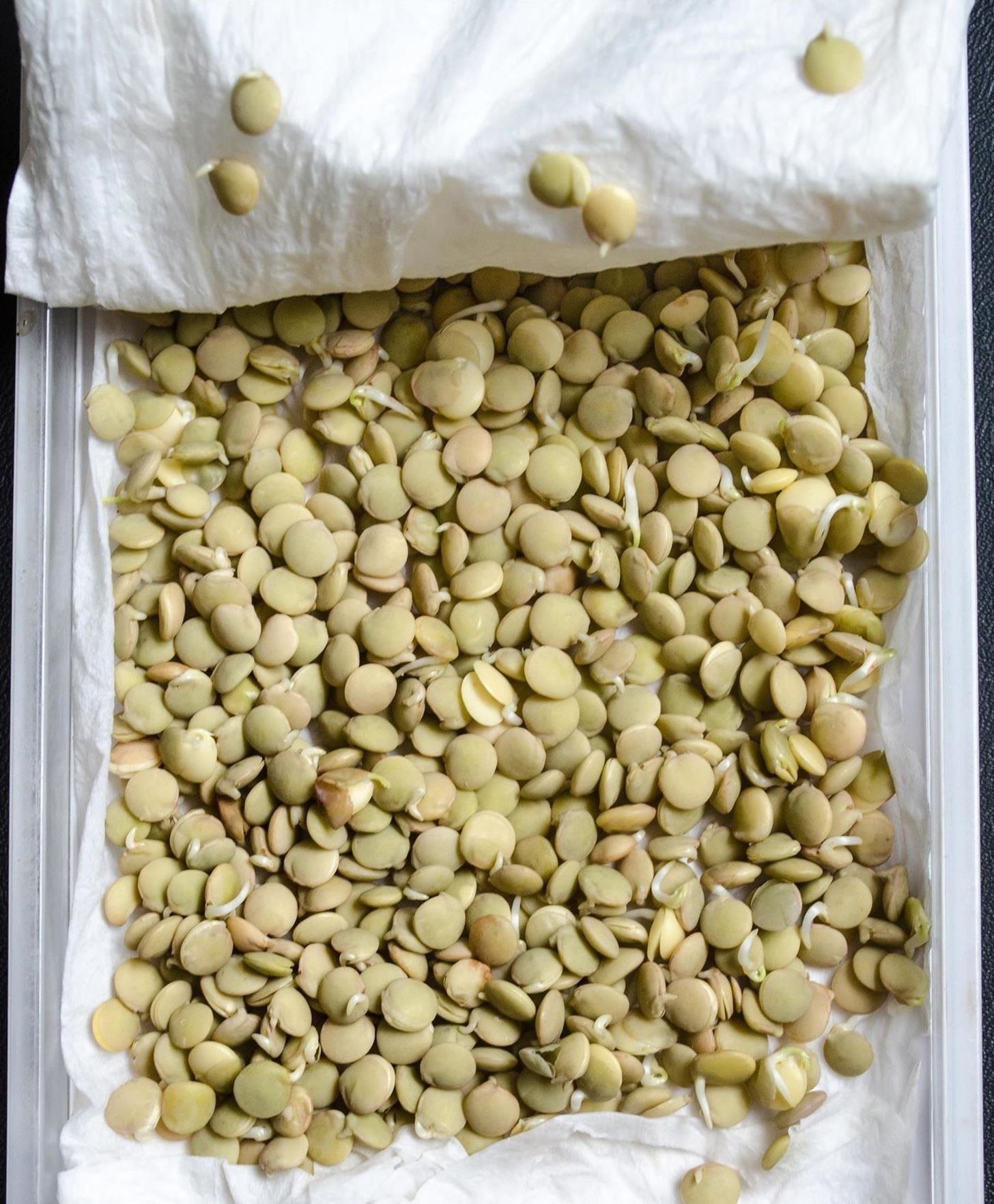 Whoa—You Can Make Sprouts from Lentils, Almonds & More!
