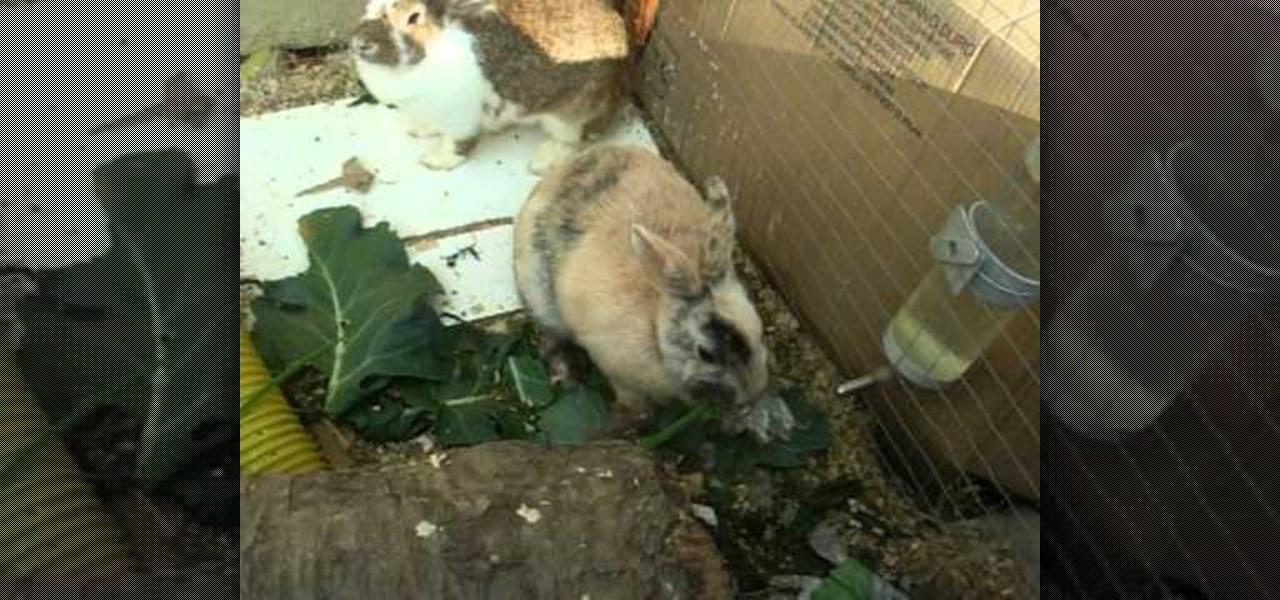 Recognize a Rabbit's Nest?