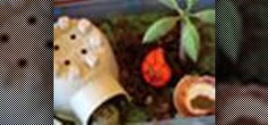 Take care of hermit crabs
