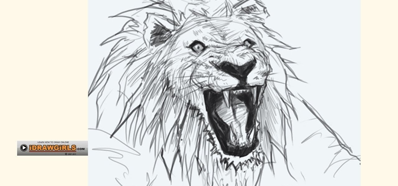 How to Draw a bemused lion head for beginners « Drawing & Illustration