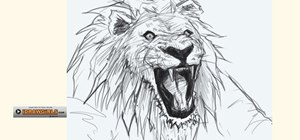 Draw a bemused lion head for beginners
