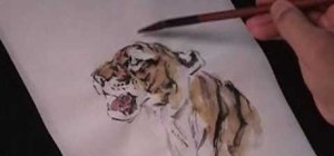 Draw a roaring tiger in Chinese brush painting