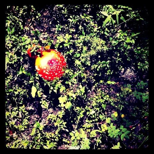 Instagram Challenge: Mushroom