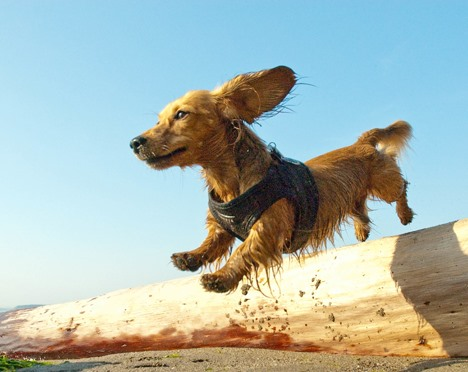 Get Inspired! 50 Adorable Pet Portraits