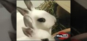 Adopt and properly care for a pet rabbit