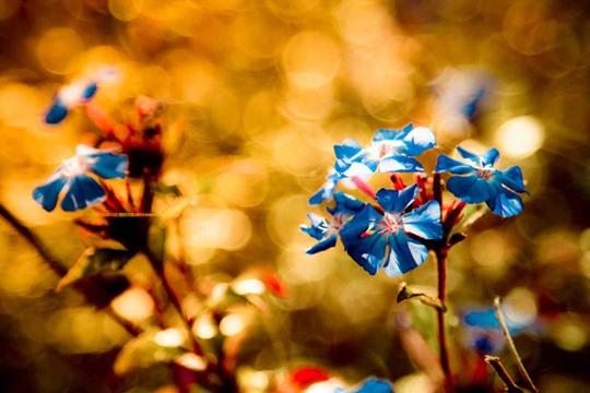 Get Inspired! 50 Breathtaking Bokeh Photographs