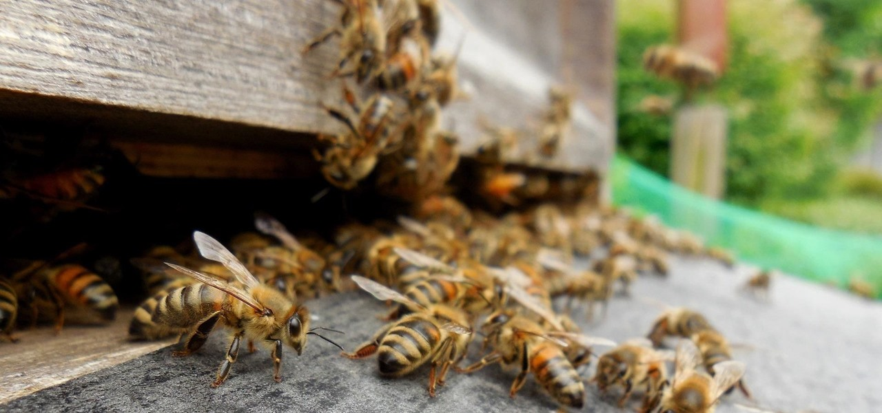 Antibiotics Could Be Contributing to Dramatic Drop in Bee Populations