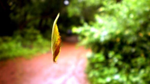 Blurred Photography Challenge: Blurred