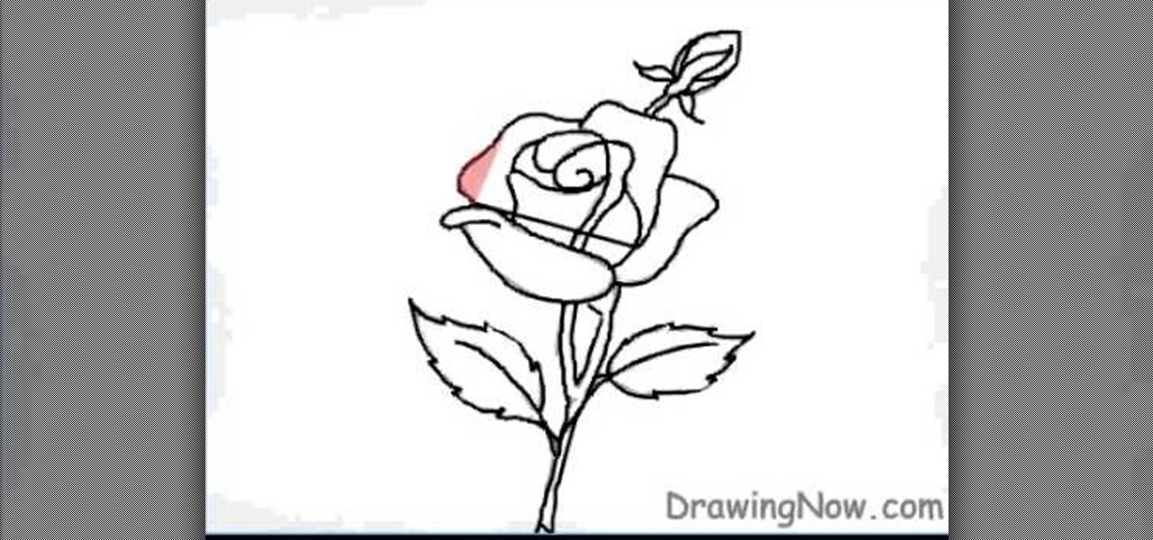 How to draw a single red rose for beginners drawing for Easy to draw roses for beginners