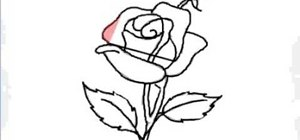 Draw a single red rose for beginners