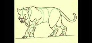 Draw a tiger