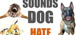 5 Sounds Dogs Hate