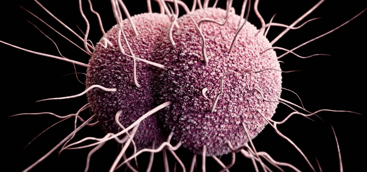 Unique Way Gonorrhea Breaks Down the Female Body's Defenses