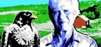 Did George Plimpton Make a Falconry Game for ColecoVision?