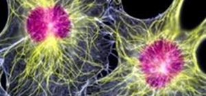 Understand the Way Our Immune System Fights Enemies Like a Modern Army