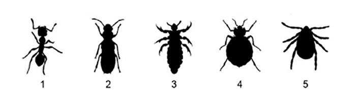 Bed Bugs Are In A Lot Of Hotel Rooms Here S How To Spot Them Invisiverse Wonderhowto