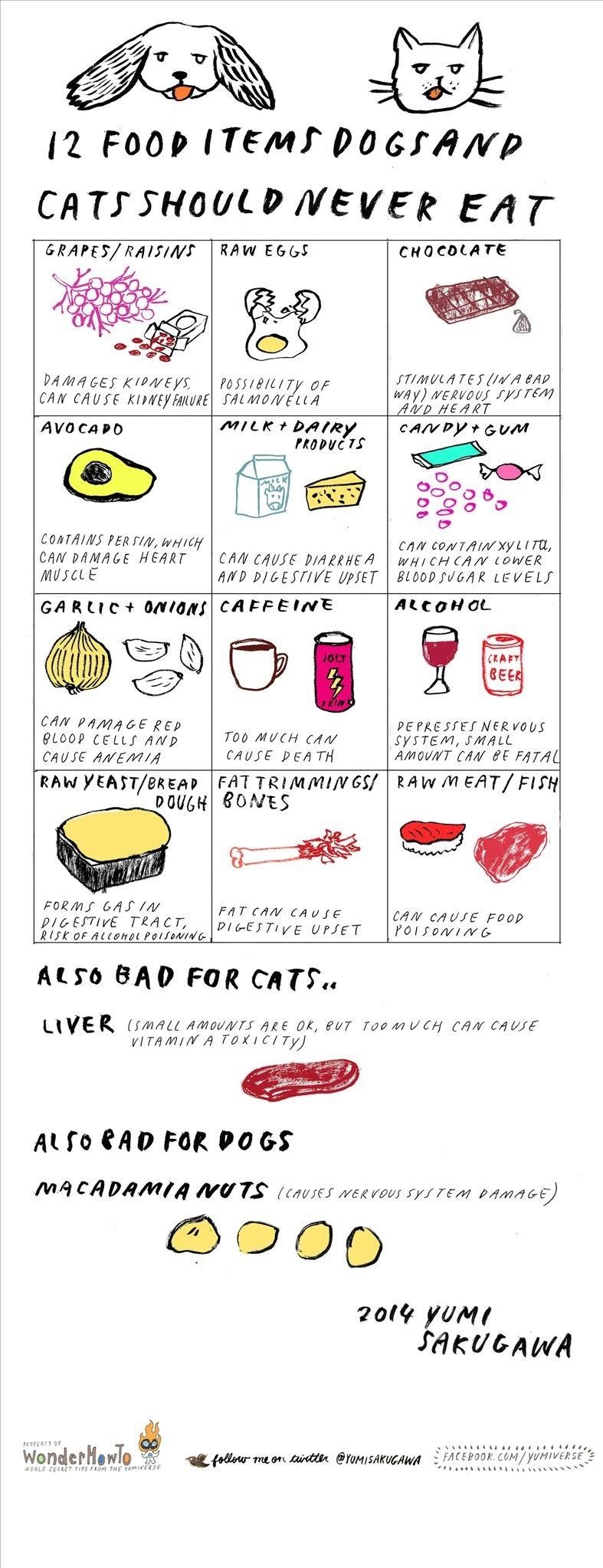 Foods Dogs And Cats Should Never Eat