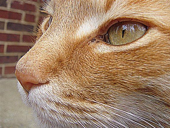 Pet Portrait Challenge: Crash - Rest In Peace