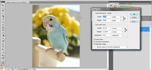Resize photos in Photoshop CS4