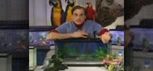 Care for pet fish and their aquariums