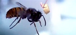 Humiliating Insects With the World's Smallest Catapult (and Lots of Mini Pies)