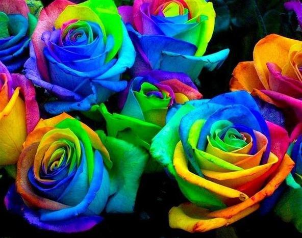 http://img.wonderhowto.com/img/93/47/63419287461421/0/howto-grow-psychadelic-roses.w654.jpg
