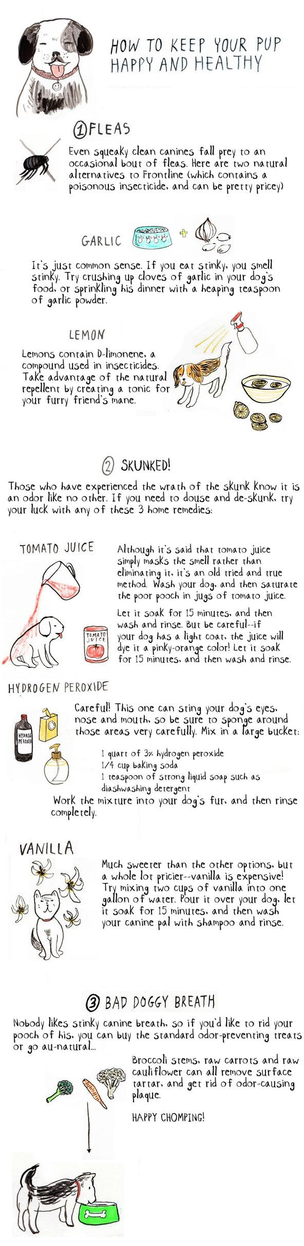 Home Remedies for Dogs: Treating Fleas, Bad Breath, & Skunk Smell