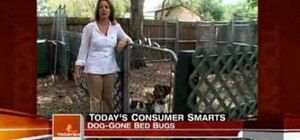 Use trained dogs to get rid of bed bugs