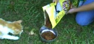 Keep ants from a bowl of petfood