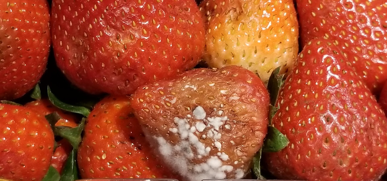 Microbe-Fighting Plastic Wrap Keeps Fruits Fresher for a Week