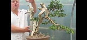 Style an old yamadori bonsai