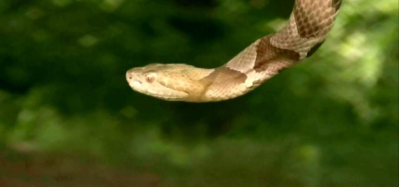 Reptile Gardens Snakes Snake in Your Garden