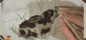 Draw a rabbit and dragonfly - Chinese brush painting