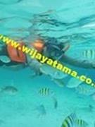 Wijayatama Tour Pulau Seribu