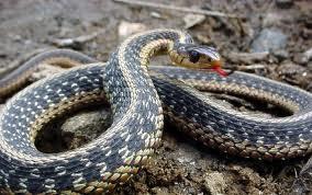 snake wake up