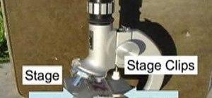 Use a compound light microscope