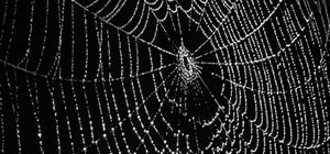 Spider Web Pages with Nmap for SQLi Vulnerabilities